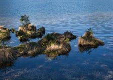 Piceas y maravillas en el lago de la montaña foto de archivo libre de regalías