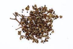 Pices, Droge Zanthozylum-limonella Alston is een Thaise geur Geïsoleerdj op witte achtergrond royalty-vrije stock afbeeldingen