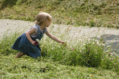 Pick flowers. Little girl picking wild flowers near the road royalty free stock photo