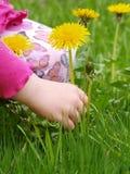 Pick flowers Stock Image