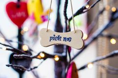 Pick me message on small wood board Royalty Free Stock Images