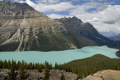 The Pick of the Peyto Pictures. Glacier-fed Peyto Lake in Banff National Park, Alberta showing the true opaque aqua color caused by the finely-ground glacial Royalty Free Stock Photography