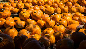 Pick a Pumpkin which one is right for you ? Stock Photography