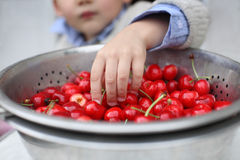 Pick up the cherry Stock Images