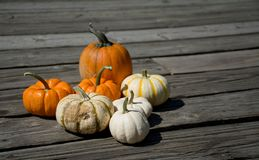 Pick up couple of Pumpkins. Getting Pumpkins for decorations and celebration Stock Image