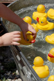 Pick Up A Duck. A child reaches in and chooses a duck from the duck pond at the local fair Stock Photos