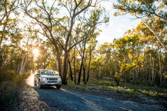 Pick-up truck forest road sunrise Royalty Free Stock Photos