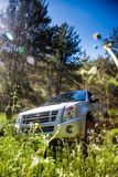 Pick-up truck and long grasses Stock Photography