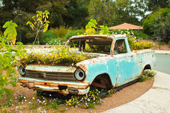 Pick up ute truck overgrown with field flowers. Abandoned, rusty pick up truck overgrown with field flowers Stock Photos