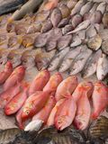 Pick before you eat. Fresh fish for sale in india, pick before you eat Royalty Free Stock Photo