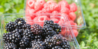 Pick-your-own. Blackberries and raspberries in plastic containers Royalty Free Stock Photos