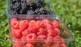 Pick-your-own. Blackberries and raspberries in plastic containers Stock Photography