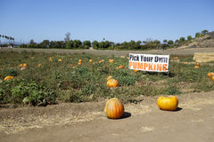 Pick Your Own Pumpkins Royalty Free Stock Photography