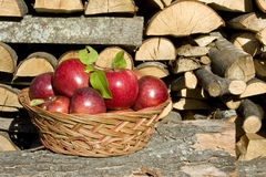 Picked apples in basket Royalty Free Stock Photography