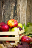 Picked apples in a wooden crate Stock Photos