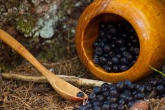Picked blueberries spread on a ground. Mortar and wooden spoon with blueberries in wood Stock Images