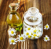 The picked camomile flowers in a glass jar Stock Images