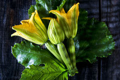 Picked From The Garden, Zucchini Flowers Stock Images