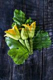 Picked From The Garden, Zucchini Flowers Stock Image