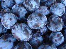 Picked purple plum fruits Stock Photo