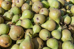 Picked ripe pears Stock Image