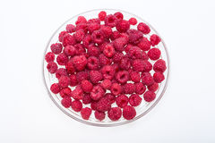 Picked ripe red raspberries. Stock Photography