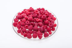Picked ripe red raspberries. Royalty Free Stock Photos