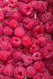 picked ripe red raspberries. Stock Photo