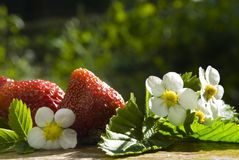 Picked strawberry Royalty Free Stock Photos