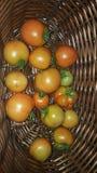 Picked Tomato Stock Photo