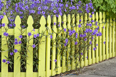 Picket Fence. Yellow picket fence with lavender flowers Royalty Free Stock Image