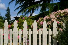 Picket fence and azalea Stock Image