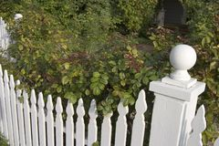 Picket Fence Detail. A picket fence with dense bushes behind it royalty free stock photography