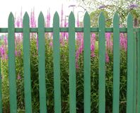 Picket fence and flowers. Bright purple flowers behind a green picket fence stock photos
