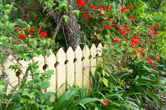 Picket fence. Pale yellow picket fence in country garden Royalty Free Stock Photography