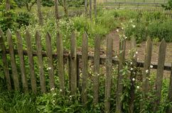 Picket Fence. A picket fence around a country garden Stock Images