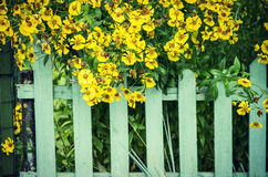 Picket fence and yellow flowers Stock Photos