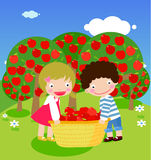 Picking apples. Boy and girl picking apples Stock Image