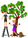 Picking apples. Two teen aged cartoon kids helping each other to get apples from a tree Royalty Free Stock Photography