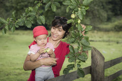 Picking of apples is fun. Mother is learning daughter to pick apples royalty free stock images