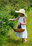 Picking berries on a michigan farm Royalty Free Stock Images