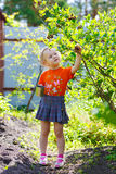 Picking of  berry Royalty Free Stock Images
