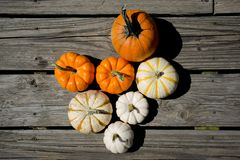 Collection of Pumpkins. Picking the best pumpkins in the farm. White small one to orange medium size stock photo