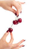Picking cherries royalty free stock images