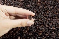 Picking coffee bean Stock Photos