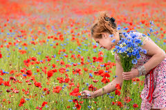 Picking cornflowers Royalty Free Stock Images