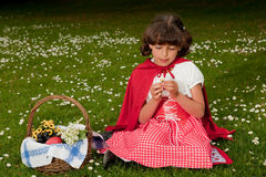 Picking daisies. Little red riding hood picking daisy flowers in grass royalty free stock photo