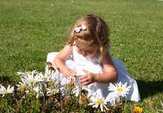 Picking Daisies. Toddler girl picking daisies in a California garden Stock Images