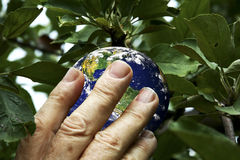 Picking the earth Stock Photos