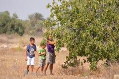 Picking Figs - Family Woman Kids Children Fruit Boys Stock Photos